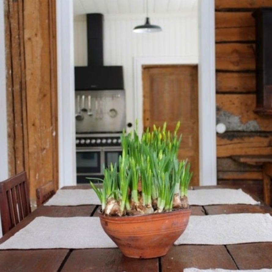 @domargard_villaolivian rustiikkiin keittiöön pellavaliinat ja nupullaan olevat narsissit tuovat kevään.
