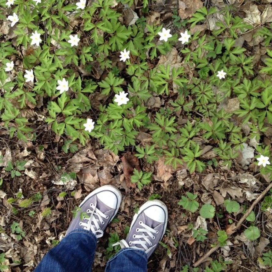 Kauneimmat kukat löytyvät luonnosta. Käväisin nopeastilähimetsikössä ja löysin kauniit kedotvalkovuokkoja ja jopa pari keltavuokkoa.