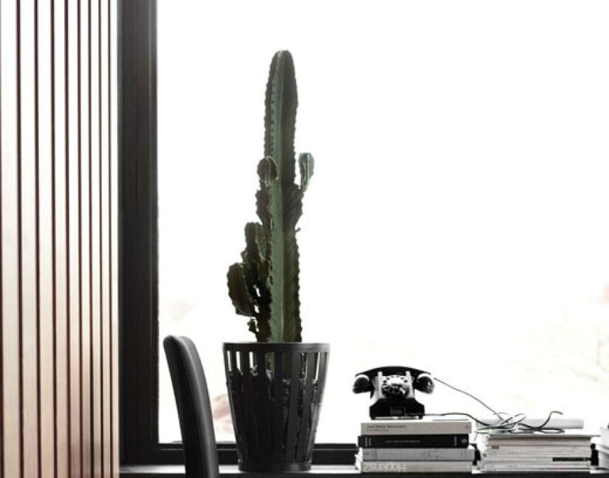 """<p><p>Räyh, mitä maskuliinisuutta! Kaktukset ovat helppohoitoisia laiskalle kastelijalle. Ne ovat nyt muodikkaita sisustuksessa ja niiden selkeä linja sopii täydellisesti linjakkaan tumman sisustuksen seuraan. Kuva: <a href=""""http://www.boconcept.com/fi-fi/"""">Bo Concept</a> .</p></p>"""