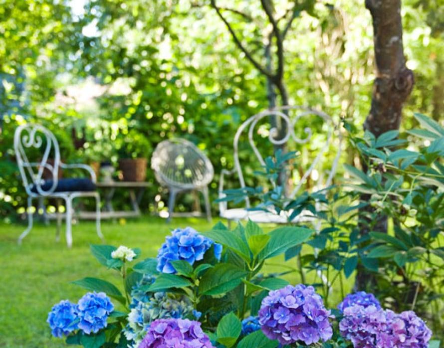 <p><p>Vuosien varrella hankitut ranskalaiset metalliset puutarhakalusteet siirtyvät kesäisin majasta puutarhaan. Hortensiamerestä pilkistää  tapanilalaisesta Mosa Interiors -liikkeestä löydetty patsas.</p></p>