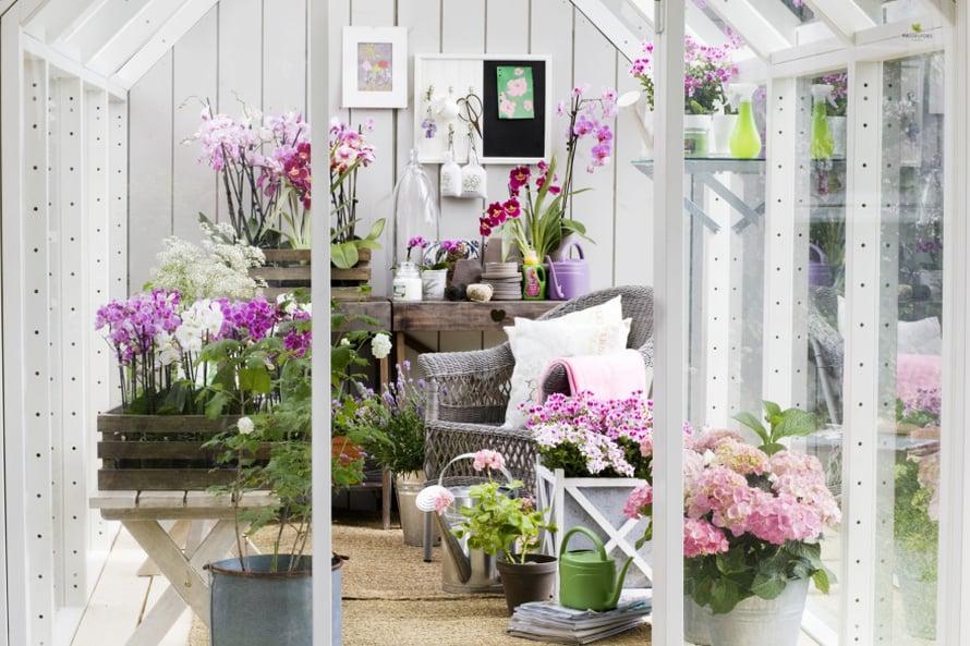 Romanttiset juhlat vaativat paljon vaalenpunaisia kukkia. Sisusta kasvihuone kauniiksi rottinkituoleilla ja vanhoilla puulaatikoilla, kuvaPlantagen.