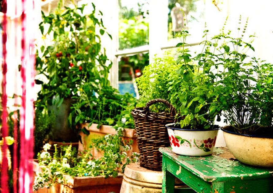 <p><p>Tomaatin, yrttien ja muiden hyötykasvien sekä kukkien istutusalustaksi on löytynyt vanhoja pesuvateja ja koreja.  Kauniisti ränsistyneet vanhat tuolit ja ylösalaisin käännetyt ruukut nostavat kasvit eri tasoille.</p></p>