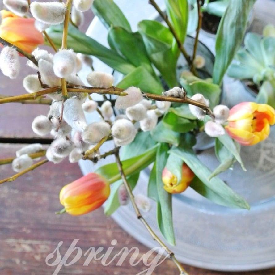 @bohemeinterior yhdistää tulppaanit (varma kevään merkki!) ja pajunkissat asetelmaksi.