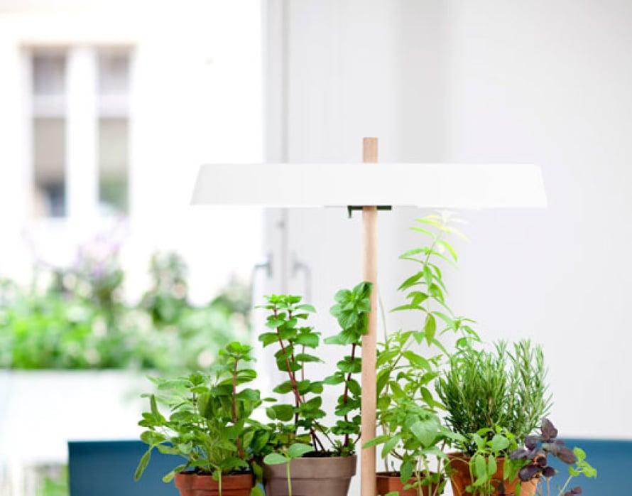 <p><p>Tämä vihervalo on niin kaunis, että tätä kelpaa pitää esilläkin. Kukkapöydät ovat nyt muodissa ja tämähän on kuin minikokoinen kukkapöytä. Vinkki: yhdistä erikokoisia ja erivärisiä saviruukkuja, niin saat yrttiasetelmasta rennon. Kuva: Kekkilä.</p></p>