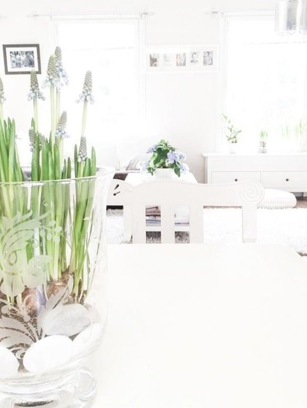@tovesusanna nauttii sunnuntaipäivistänäin kauniissa kevätkodissa. Helmililjojen aika on nyt!