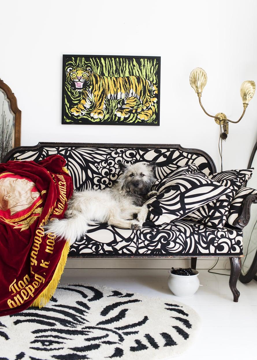 Waltti-koira viihtyy käsikirjoittajaystävä Jenni Toivoniemeltä perityllä sohvalla, jonka Paavo verhoili Marimekolle suunnittelemallaan Raakel-kankaalla. Paavon Mum'sille suunnittelema matto tuli kesällä myyntiin. Se esittää nukkuvaa eläintä.
