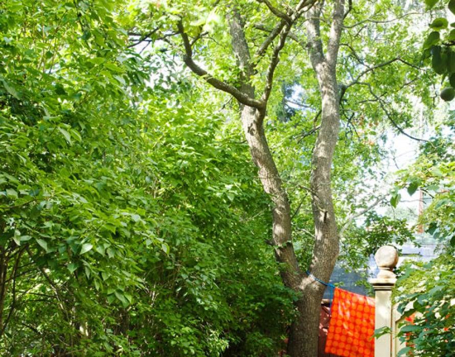 """<p><p> Talon sivustalla kulkee kivetty polku kohti talon taakse suojaan jääviä """"huoltotiloja"""" eli pyykinkuivatusaluetta ja kasvihuonetta.  Penkki pensaiden katveessa toimii  suojaisana mietiskelypaikkana.</p></p>"""