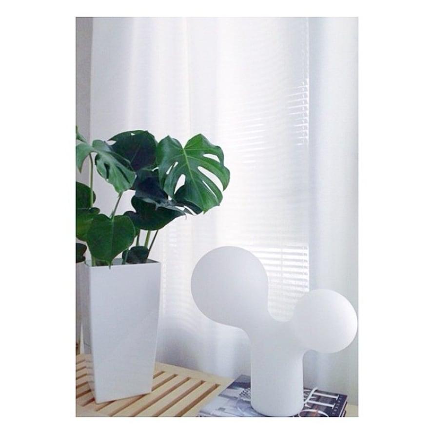 @terhi_h hakee viherkasvilla valkoiseen kotiinsa väriterapiaa. Hauskasti peikonlehti sointuu Eero Aarnion Tuplakuplaan.