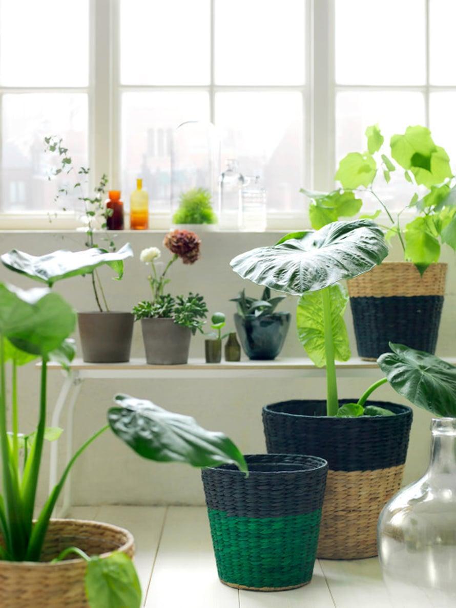 Punotut, kaksiväriset ruukut uudistavat viherkasvien ilmeen helposti ja nopeasti. Hinnat alkaen 9,99 euroa.