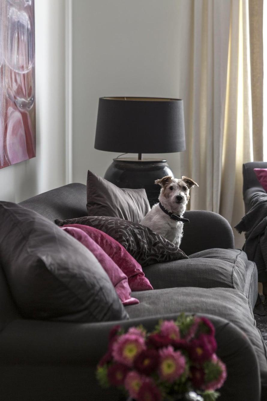 Jaska-koira nauttii uudesta kodistaan, sillä emäntä on nyt aina paikalla.
