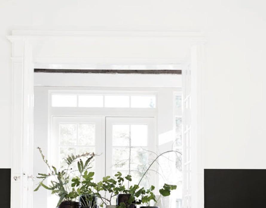 Inspiroidu kasvien rytmistä. Se syntyy mustista ja valkoisista, erilaisista ruukuista sekä monenmuotoisista viherkasveista. Kuva: Tine K Home